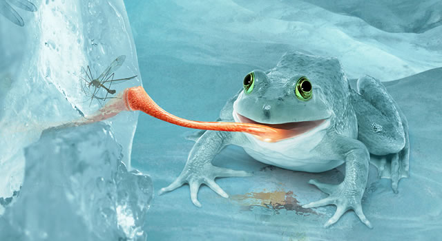 Fictional Arctic Snow Frog in Photoshop